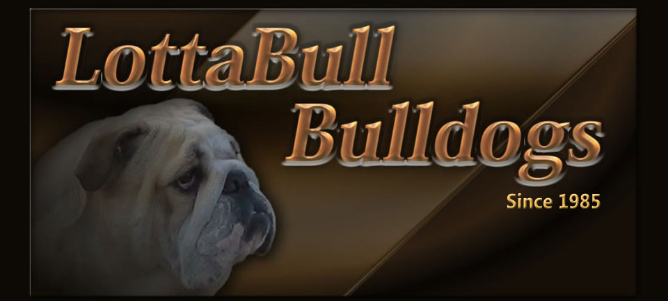 Lottabull Bullldogs
